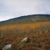 Rocky southwestern slopes of the Saana fell in northern Lapland are protected. (Imagebank of Finland's environmental administration / Aarno Torvinen 1996)