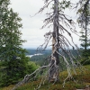 Posio, Lapland (Imagebank of Finland's environmental administration / Tapio Heikkilä 2002 )