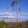 Pudasjärvi, Northern Ostobothnia (Imagebank of Finland's environmental administration / Tapio Heikkilä 1997)