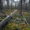 Hossa, Suomussalmi (Photo: Jyri Mikkola)