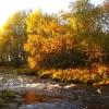 Autumn in the Basevuovdi area. Proposed enlargement of Øvre Anarjohka national park.  (Photo: Rein Midteng)