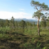 Old-growth forests close to Holmvassdalen nature reserve. Grane municipality, Nordland County (Photo: Rein Midteng).