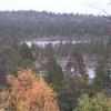 Old-growth forest at Føllvasshøgda, Pasvik.  Part of the Fennoscandian Green Belt. (Photo: Olli Manninen)