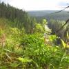 Intact forest landscape in Arkhangelsk Region (Artem Stolpovskyi, WWF Russia)