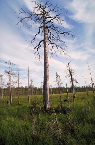 131428, Finland, YHA Imagebank