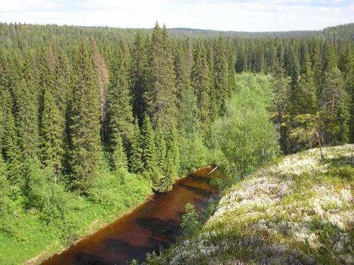 Landscape of old-growth forests in the Dvina-Pinega territory (Photo: Denis Dobrynin/ WWF Russia)