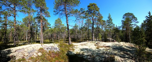 Gridino reserve in the Republic of Karelia. (Photo: Ekaterina Polevaya)